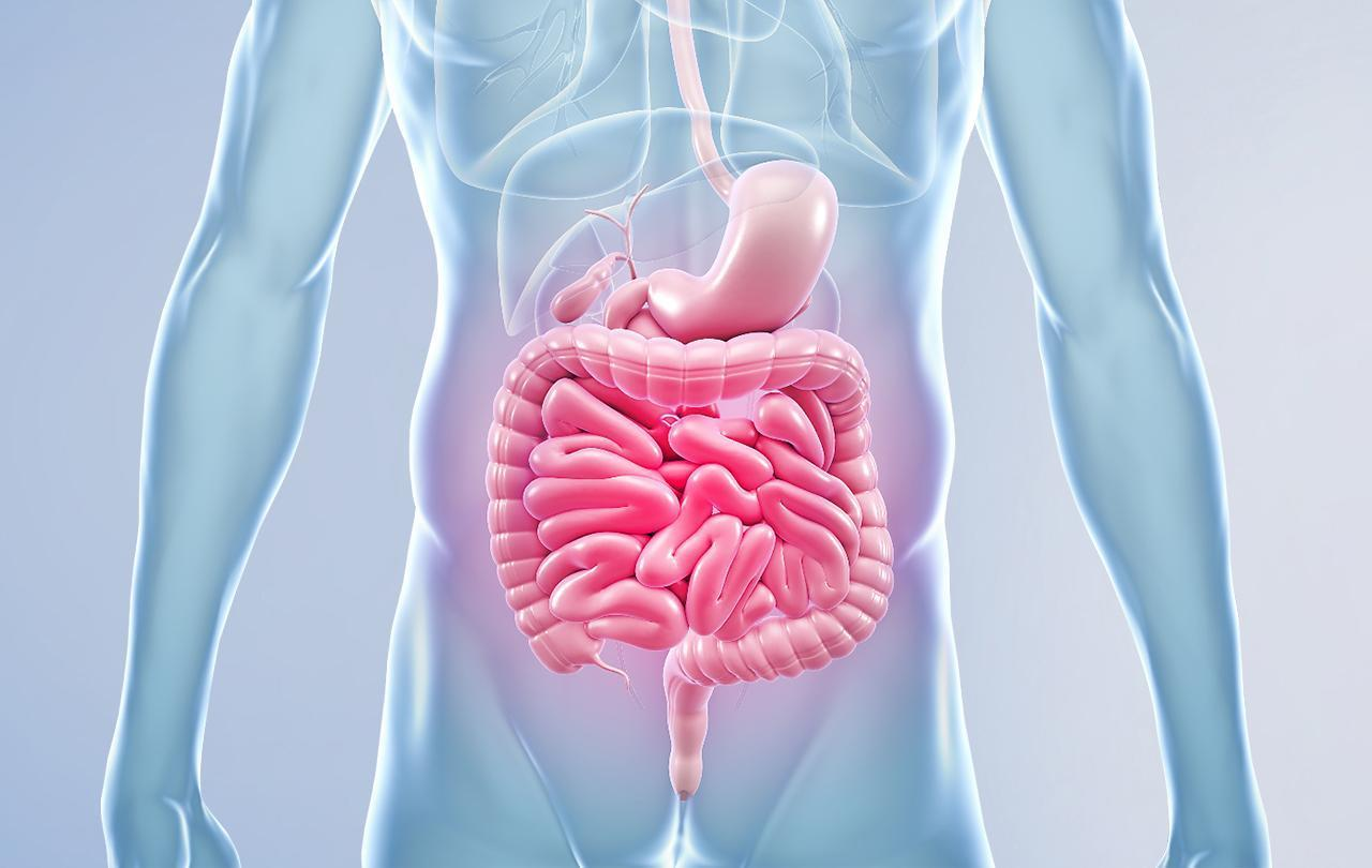 Вебинар Микробиота и кишечник